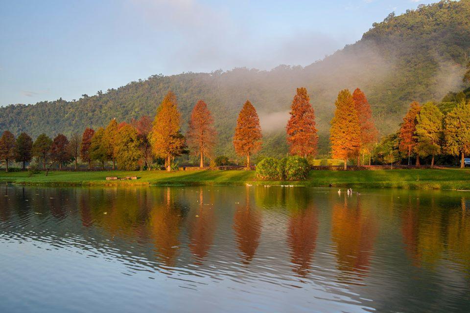員山蜊埤湖因為鄰近福園殯儀館,較少遊客去,但也變成看落羽松的「祕密景點」。圖/石...
