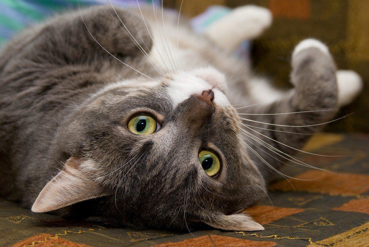 日常生活中常常聽到許多與貓咪相關的詞,這些詞就像是令人摸不著頭緒的網路用語一樣,...