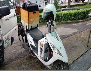 板橋動物之家上月11日收到簽收包裹,紙箱也被放在機車腳踏墊上,裡頭竟是一隻成貓。...