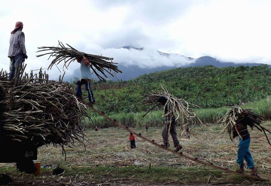 每年三個月到半年不等的碾磨季,地主不需要工人,蔗工便不能工作,無錢可領,無飯可吃...