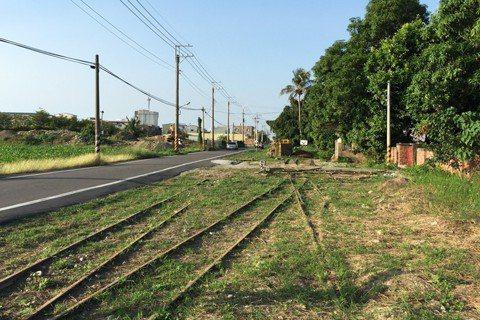 先移樹再種樹?從「蹊徑計畫」看西港堀仔頭小森林外環道爭議