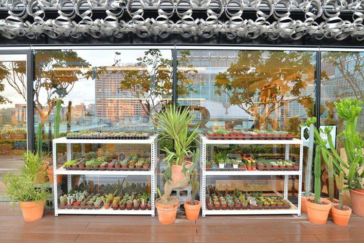 戶外空中走廊的絕佳位置,陳列了上百盆的多肉植物、大型仙人掌。圖/有肉提供