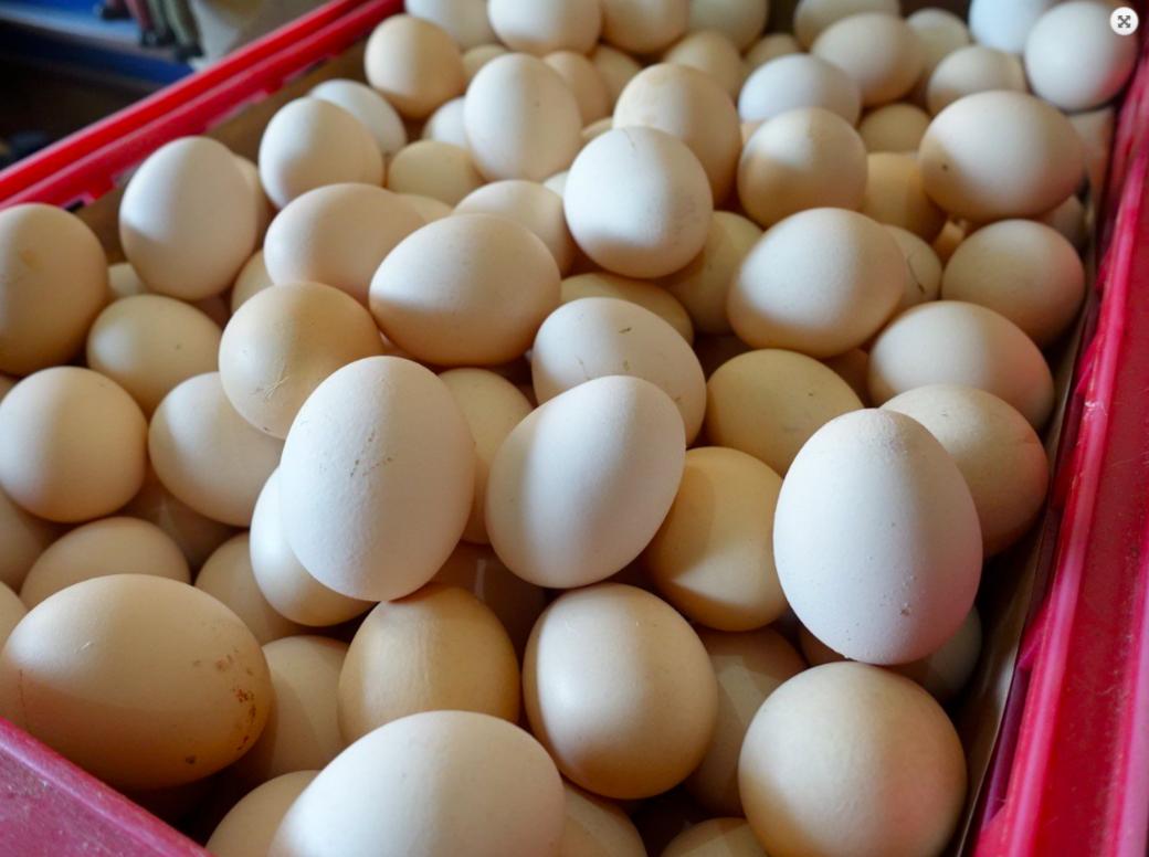 新竹蛋農透露,缺蛋已經很久,導致價格從去年七月後陸續上漲,恐會對早餐店、蛋需求量...