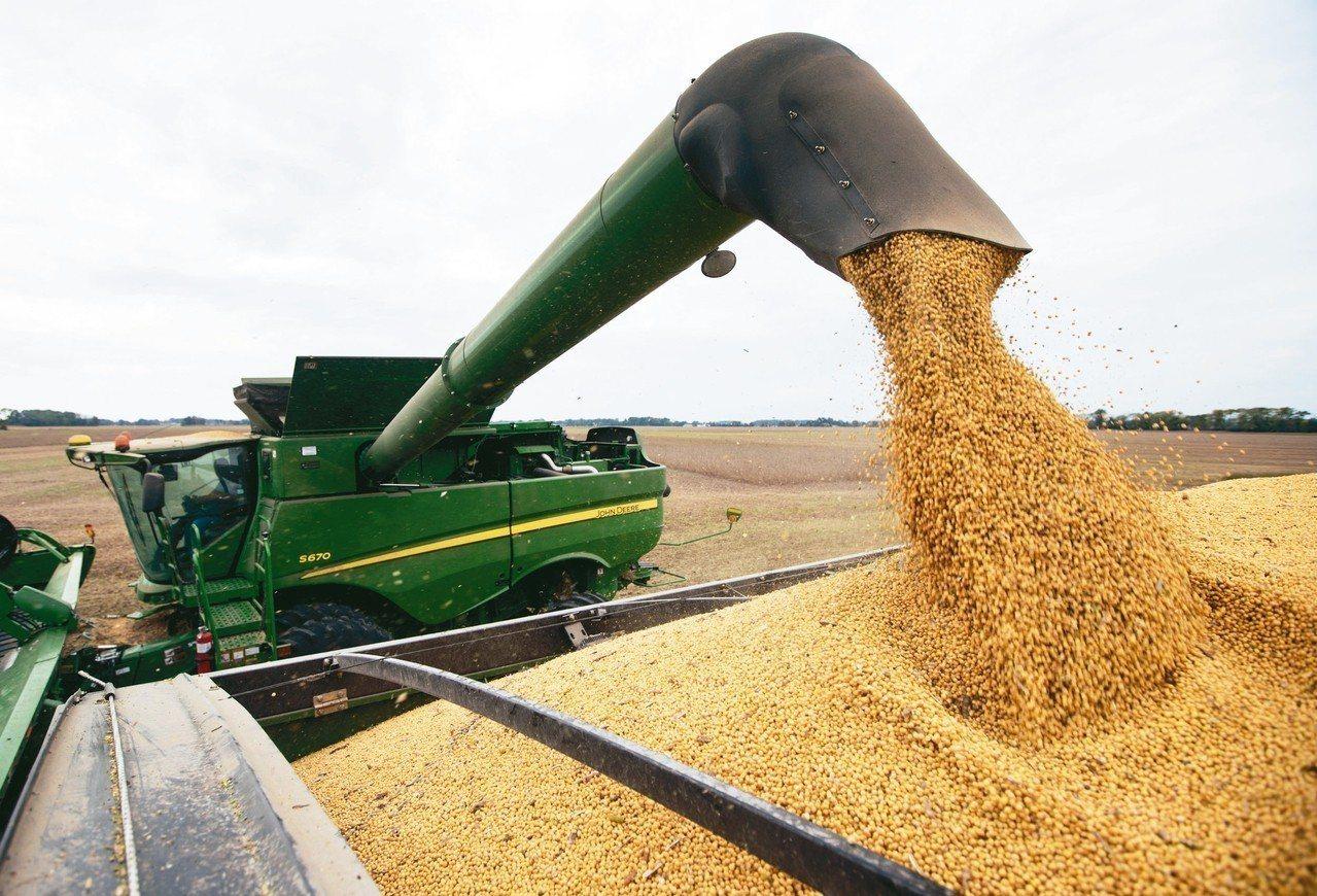 美中貿易談判在北京舉行期間,傳出大陸方面加碼採購美國黃豆,釋出善意和讓步。 (美...