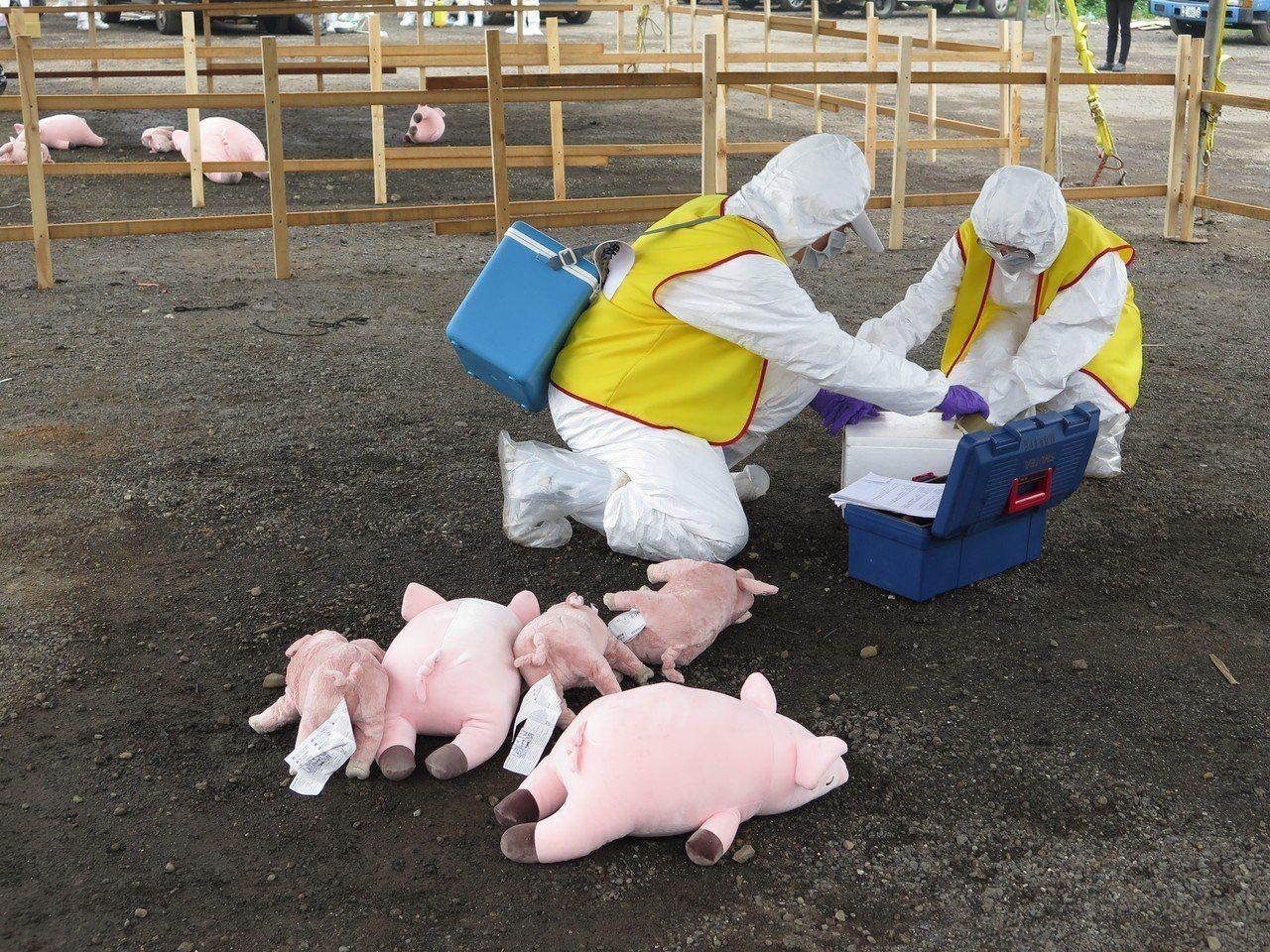 現場模擬有畜牧場發生豬隻異常死亡,防疫人員進行消毒、移動管制等作業。記者張裕珍/...