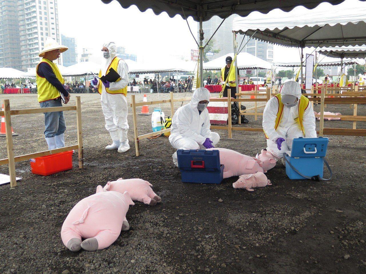 現場模擬有畜牧場發生豬隻異常死亡,防疫人員採集相關檢體。記者張裕珍/攝影