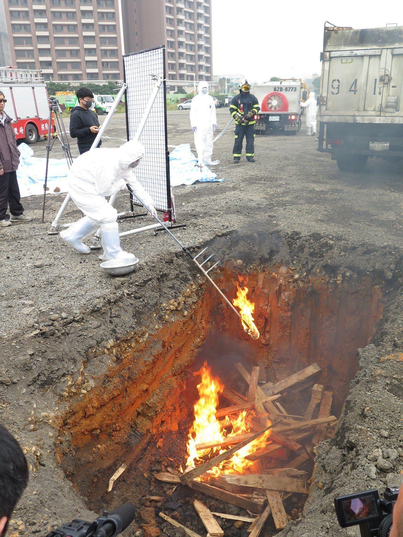 現場模擬將感染非洲豬瘟的死豬丟入坑洞焚燒掩埋。記者張裕珍/攝影