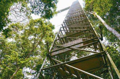 汶萊淡武廊國家公園裡的天空步道(Canopy Walk),60公尺高的支撐鐵塔如...