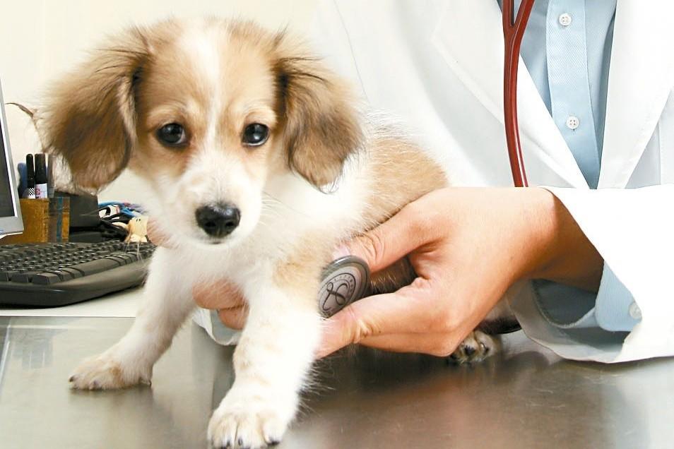寵物保險推陳出新,除了醫療之外,包括侵權、寄宿、喪葬、走失協尋等,皆有可對應的保...