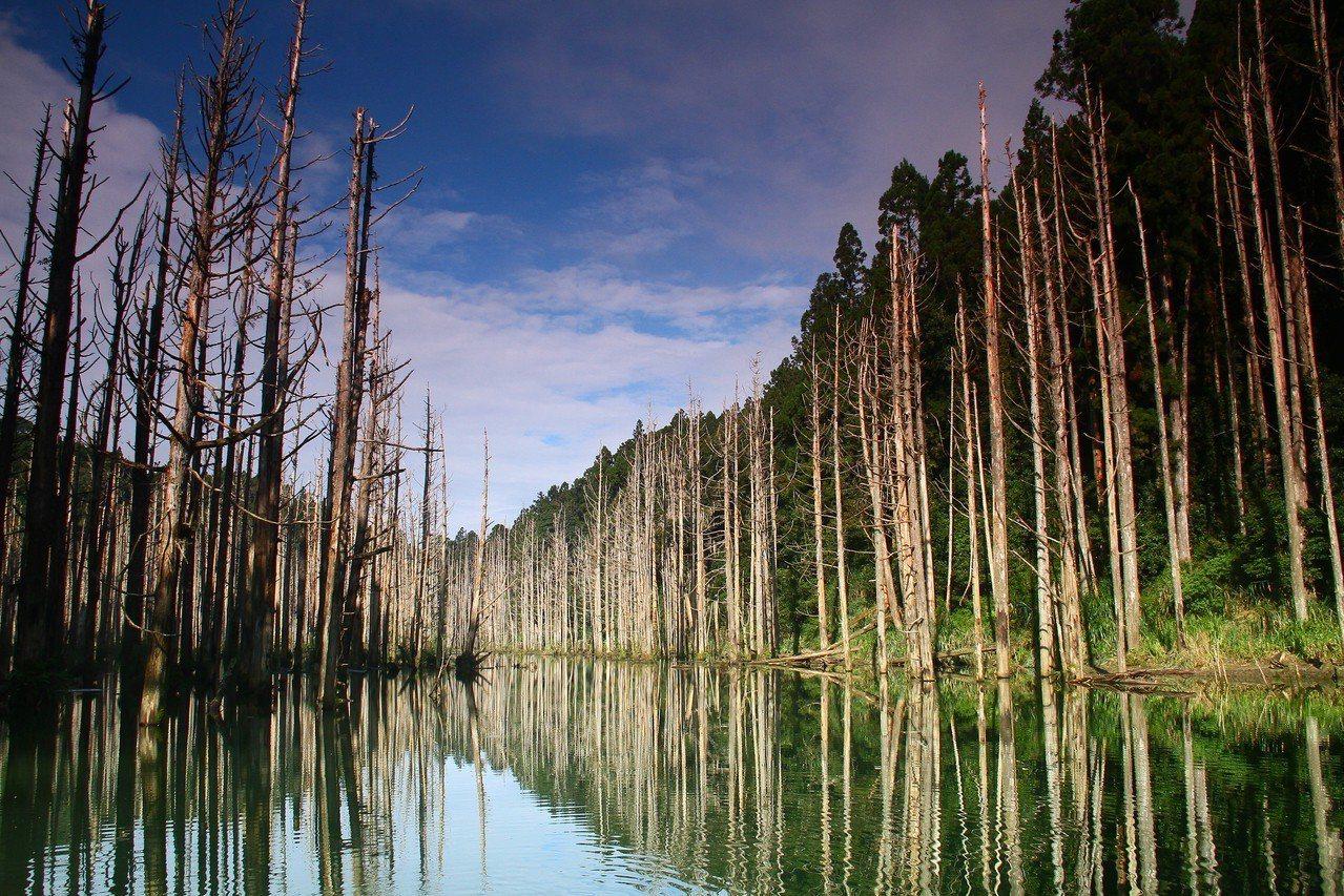 水漾森林十分夢幻。