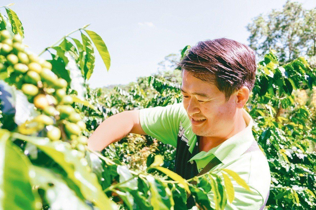 雲林古坑是咖啡的故鄉。