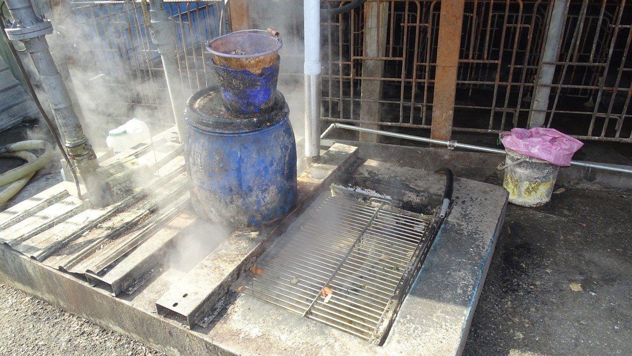 彰化縣大村鄉賴姓養豬業者經營的黑豬種豬場,廚餘在高溫蒸煮至少1小時才餵豬。 記者...