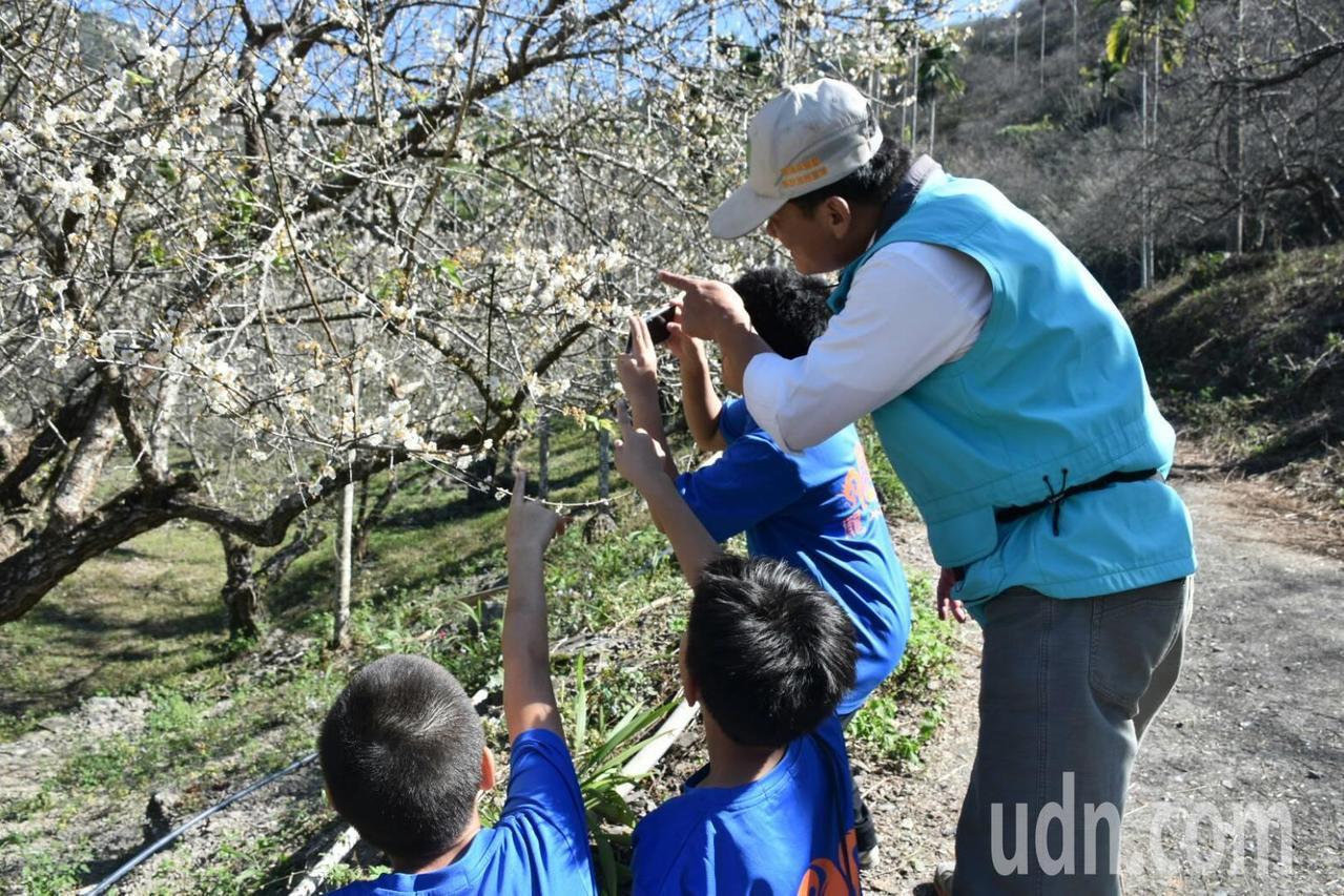 六龜竹林山區種植大面積梅樹,梅花綻放清香撲鼻。記者徐白櫻/攝影