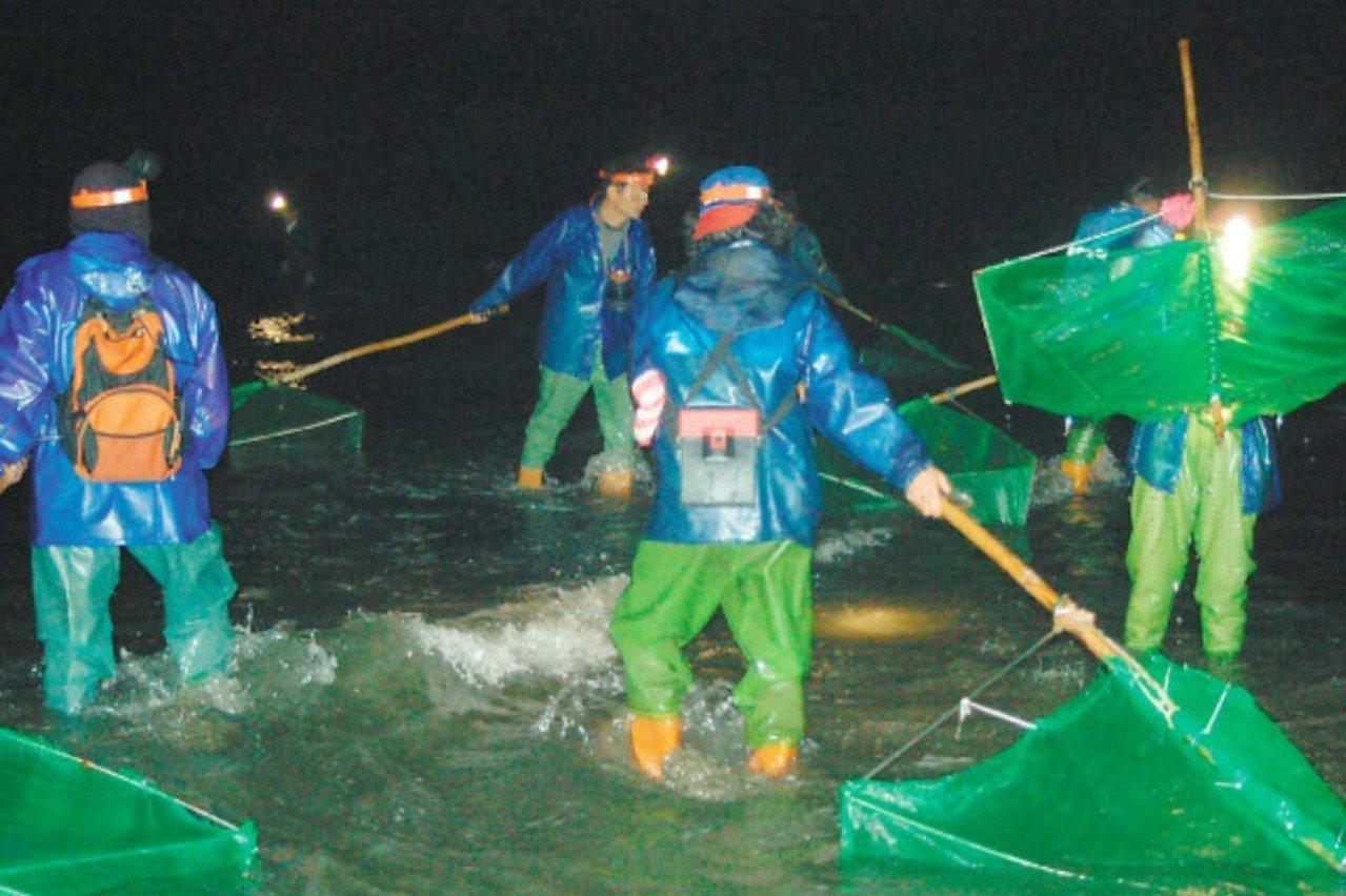 桃園沿海地區今年鰻苗捕撈延遲,沿海居民會在晚上在海邊河口捕撈鰻苗補貼生活收入。圖...