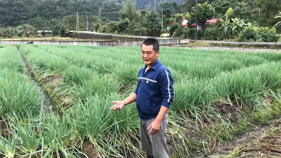 三星蔥農簡海豐表示,收割後的蔥還要清洗,洗蔥每公斤價格是9元,要從清晨5點洗到傍...