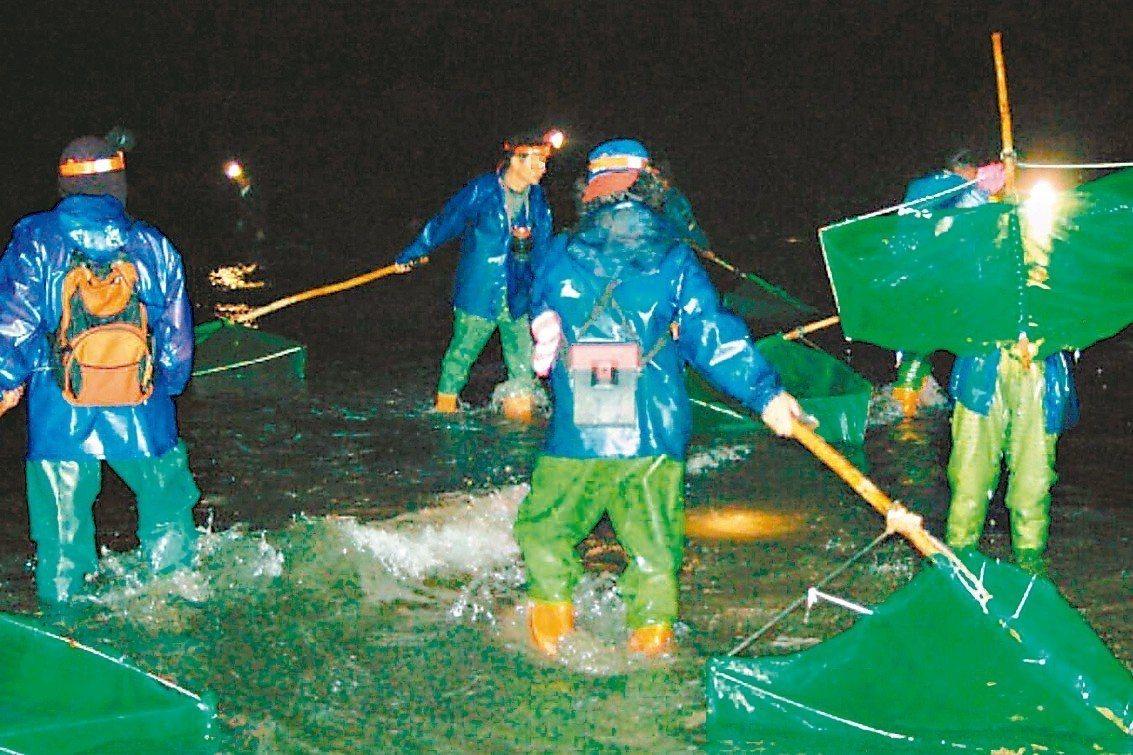 今年鰻苗捕撈延遲,桃園沿海居民會在深夜凌晨捕撈補貼收入。 圖/聯合報系資料照片