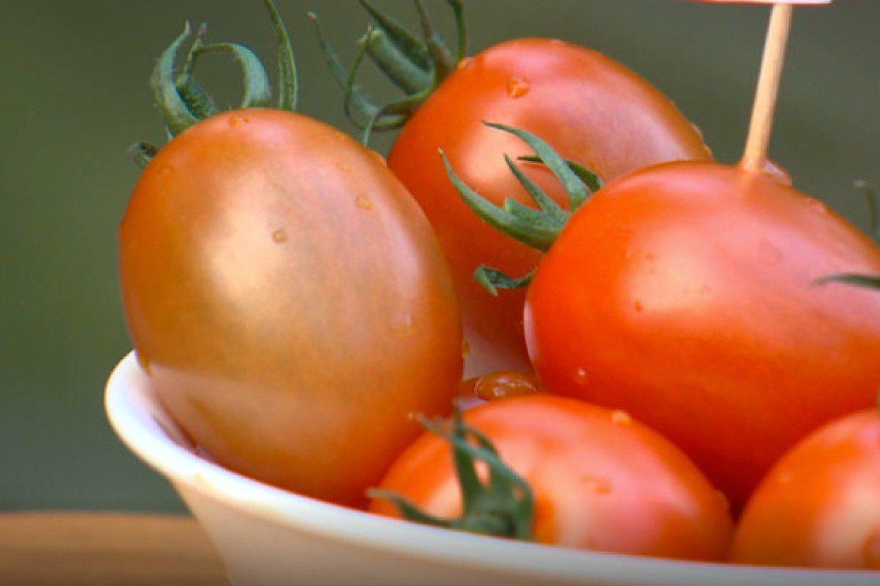 一顆顆鮮紅蕃茄,不僅是水果,更是營養豐富的蔬菜。 圖/劉亮亨 提供