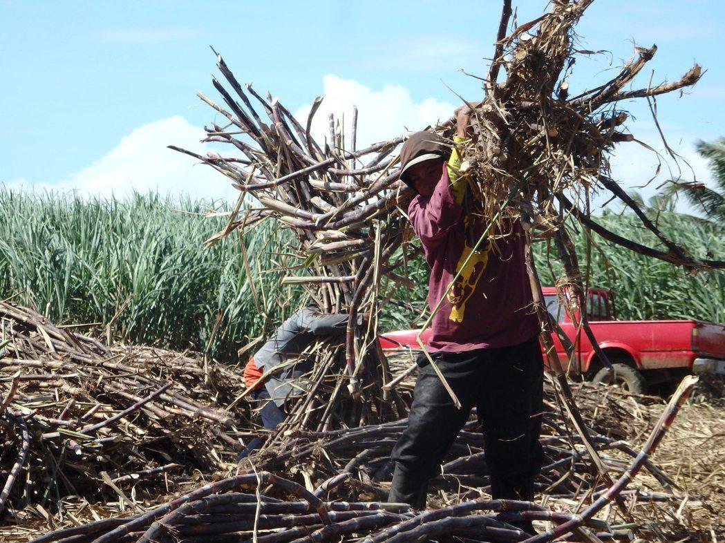 內格羅斯有著「蔗糖之鄉」的稱號,但成就這「蔗糖之鄉」的大量蔗工生活改善了嗎?這座...
