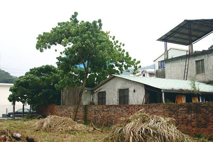 當家中或附近的大樹過於濃密,使得住家被覆蓋而「不見天日」時,要注意盡快進行修改或...
