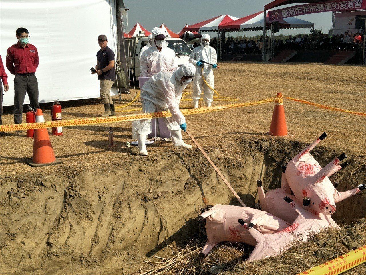現場進行豬屍掩埋模擬過程。記者謝進盛/攝影