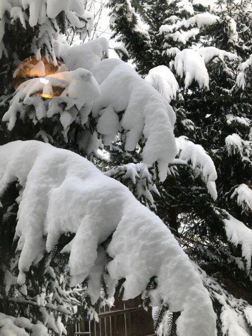 2019年大華府第一場雪,大地成一片銀色世界。(特派員許惠敏/攝影)