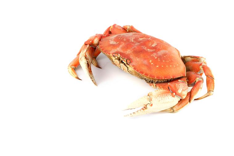螃蟹 圖/ingimage