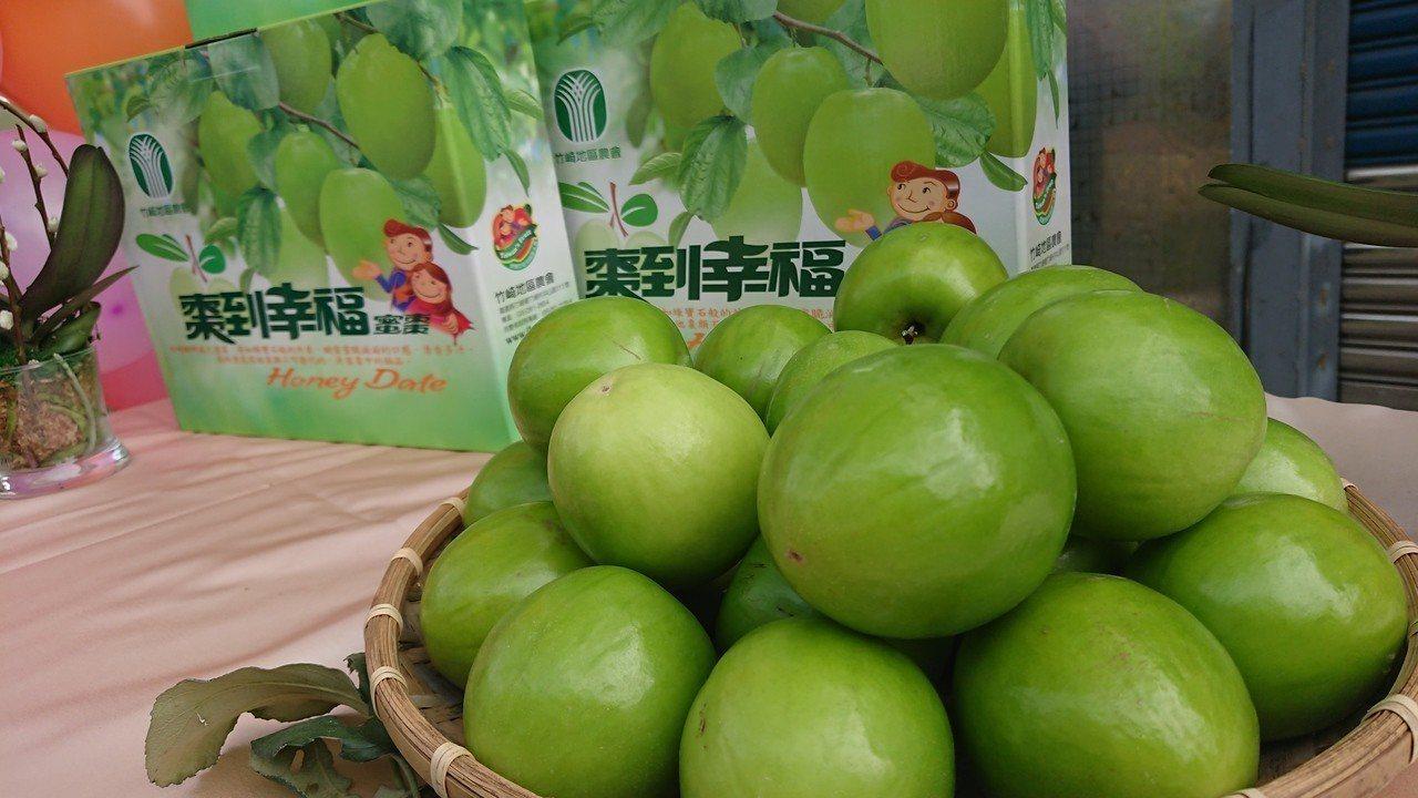 竹崎鄉金龍蜜棗正值產期,又大又甜、皮薄多汁。 記者卜敏正/攝影