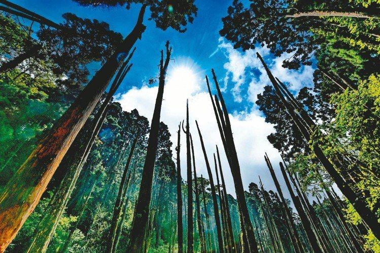 風景如夢似幻的忘憂森林。圖/南投縣政府提供