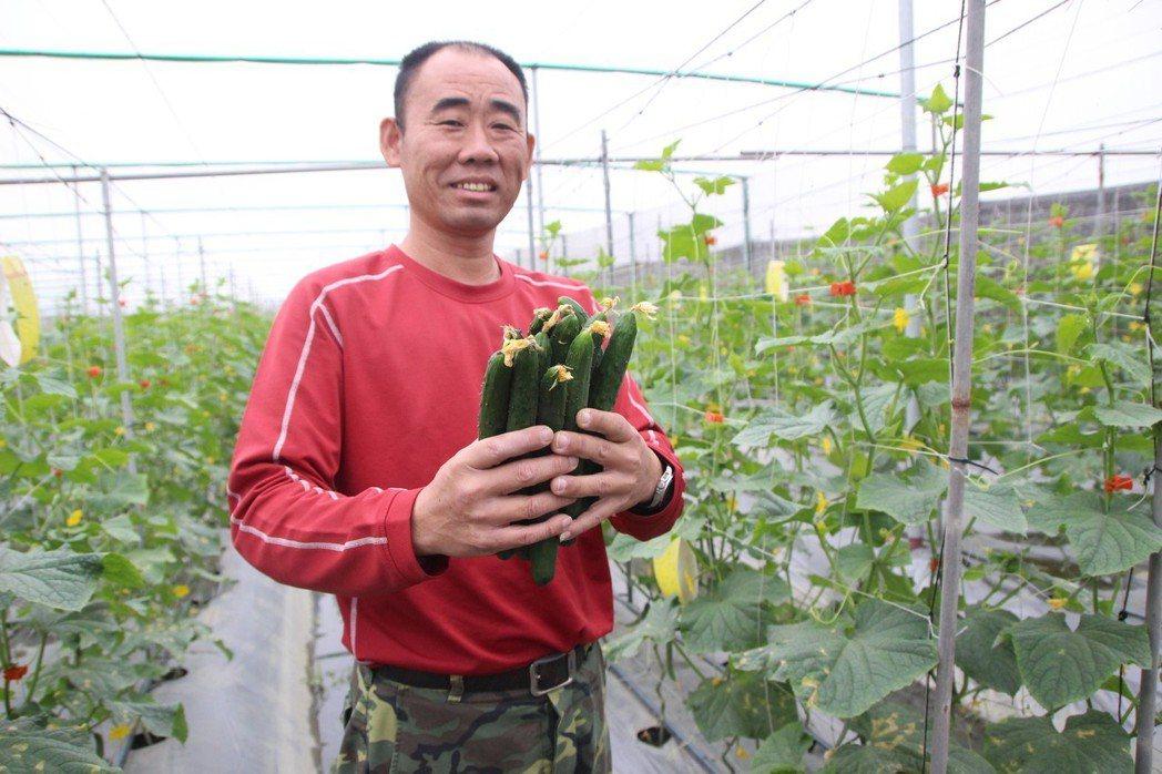 黃瓜成熟後還帶有頂花,是打了激素嗎? 記者林敬家/攝影