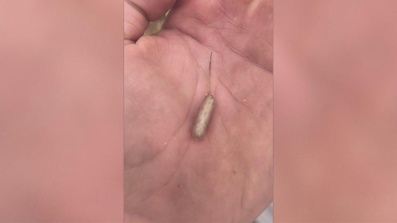 以色列背包客史洛米日前在澳洲波萊克湖拾獲一個狀似香腸的肉色生物,有著蠕蟲般的身體...