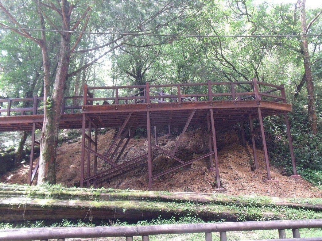 阿里山神木在1998年放倒後,設置棧道讓遊客緬懷風華。 圖/嘉義林管處提供