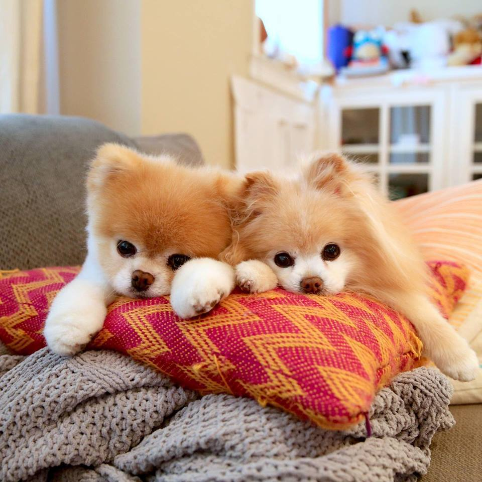 Boo(左)和Buddy是一輩子的好友。圖/摘自官方臉書