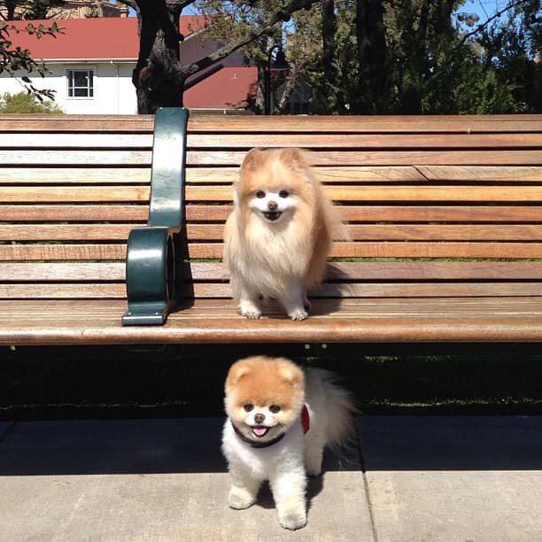 Buddy(上)與Boo拍照、玩耍都在一起。圖/摘自官方臉書