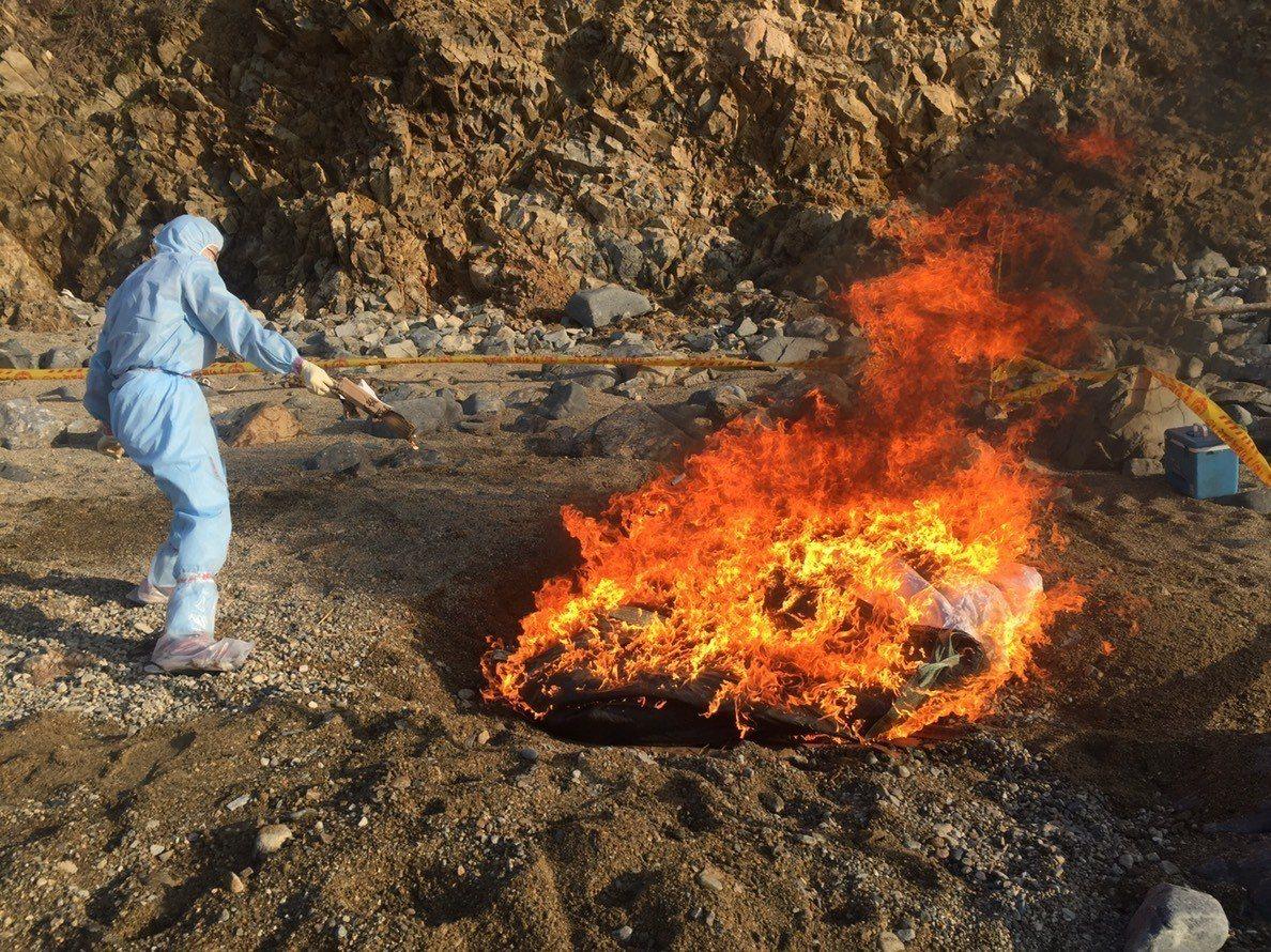 就地焚燒。圖/非洲豬瘟中央災害應變中心提供