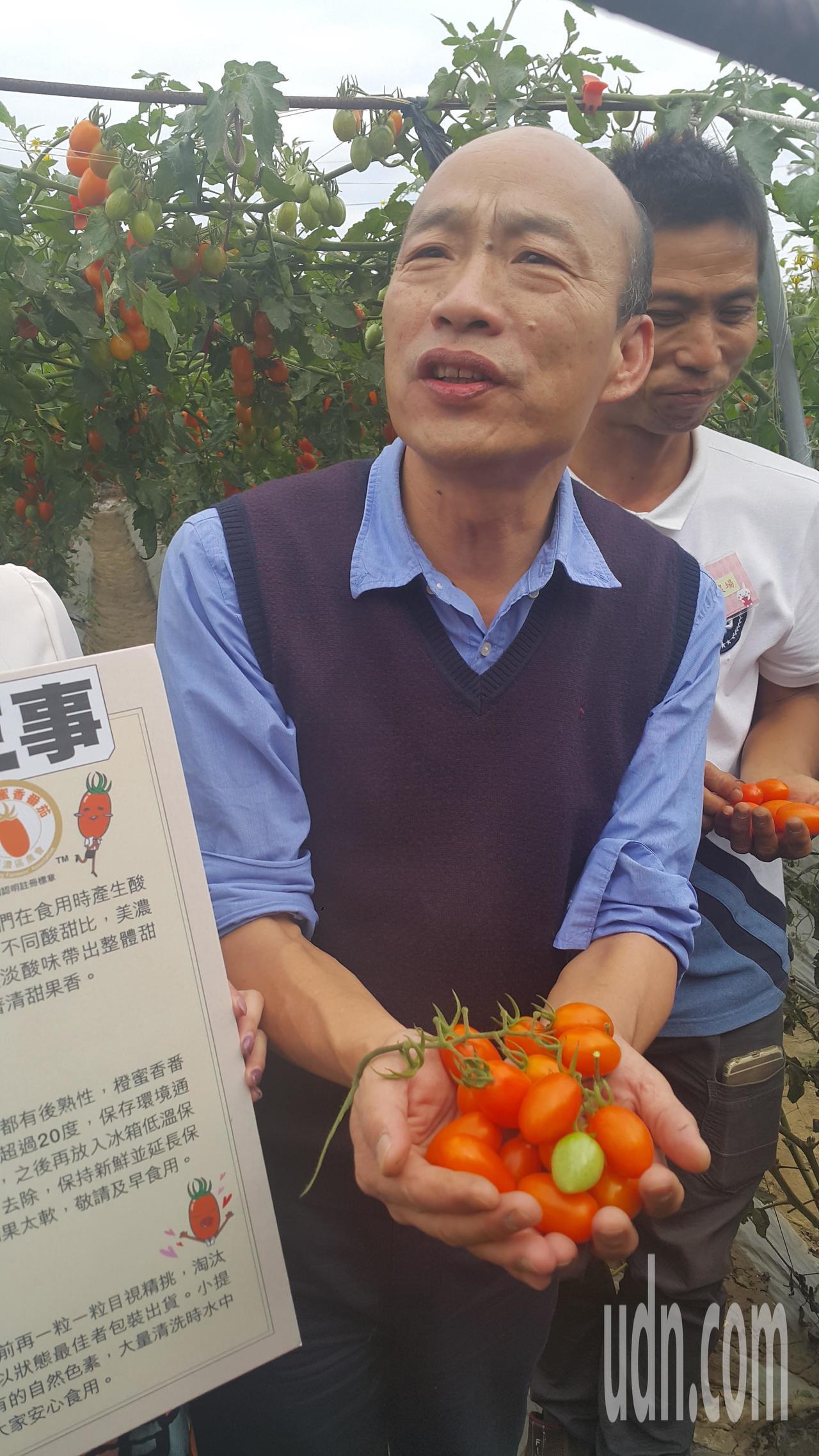 高雄市長韓國瑜參加美濃橙蜜香番茄評鑑活動,下田親採番茄試吃。記者徐白櫻/攝影