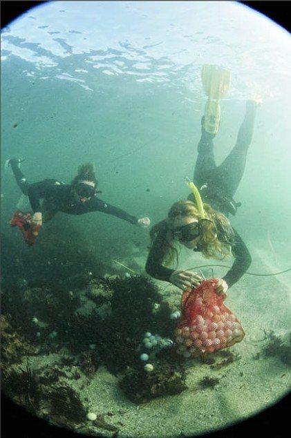 美國少女偉柏潛水發現,加州圓石海灘海底充滿高爾夫球,因此決定自己動手清理。The...