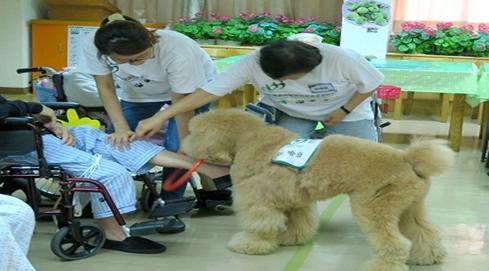 治療犬在安養中心執行動輔活動非常受歡迎,狗不會因患者有任何缺陷而有差異,對年長者...