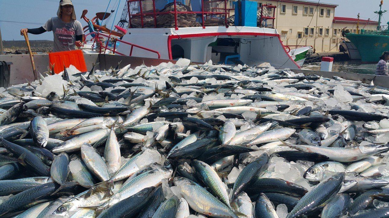 漁業署將開放100噸以上扒網漁船進紅火心捕撈,漁業署表示,「跟選舉一點關係都沒有...