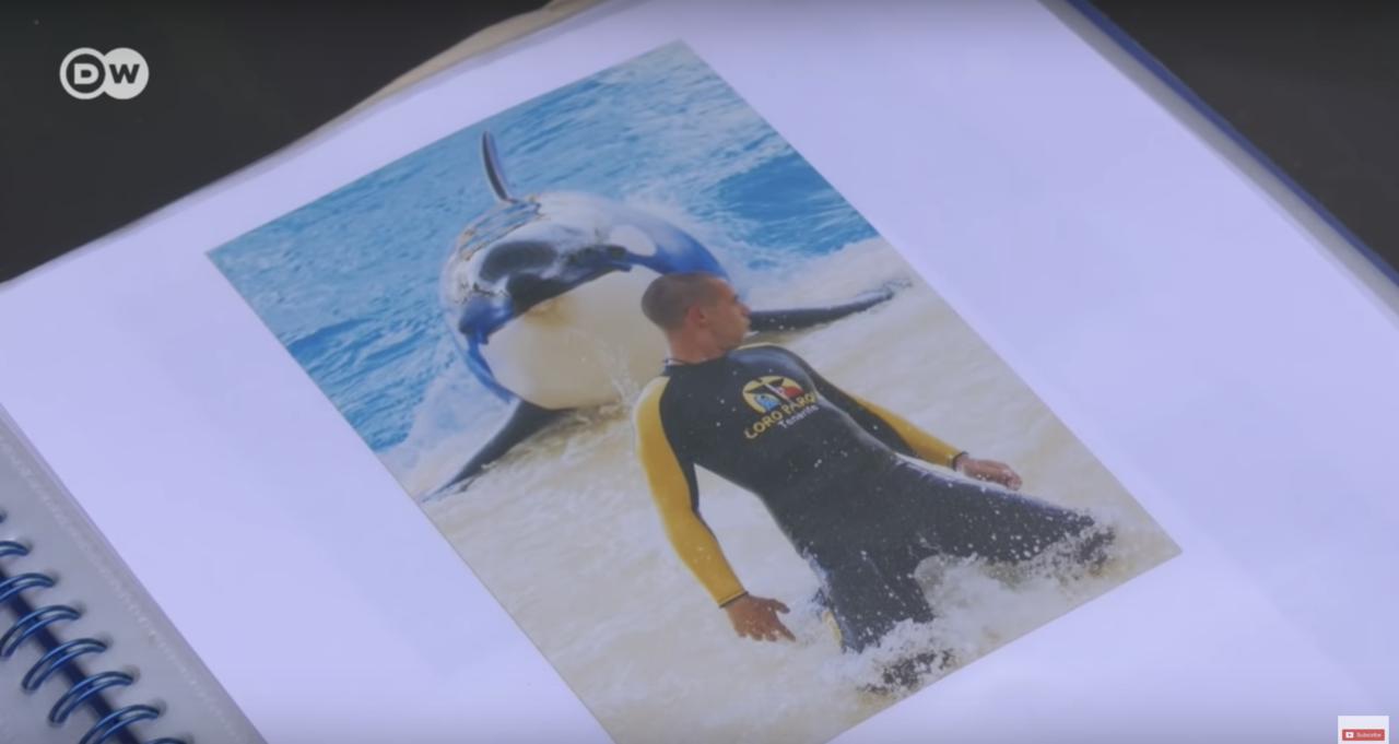 赫曼德茲的兒子與虎鯨一起訓練的照片。圖取自youtube
