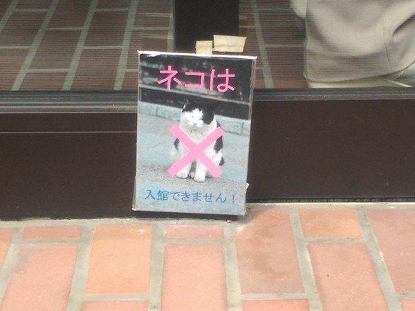 貓咪禁止進入。 圖片來源/Dcard