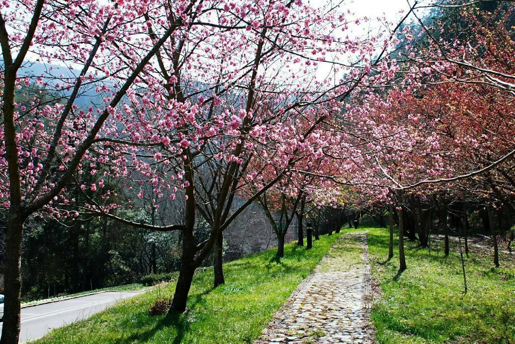 ▲武陵農場櫻花-賞櫻步道。(圖/Tripbaa趣吧!亞洲自由行專家)