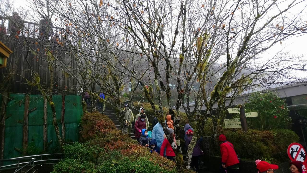 太平山國家森林遊樂區指出,依氣象局預報,明晚到後天清晨最冷,但氣候條件偏乾,氣溫...