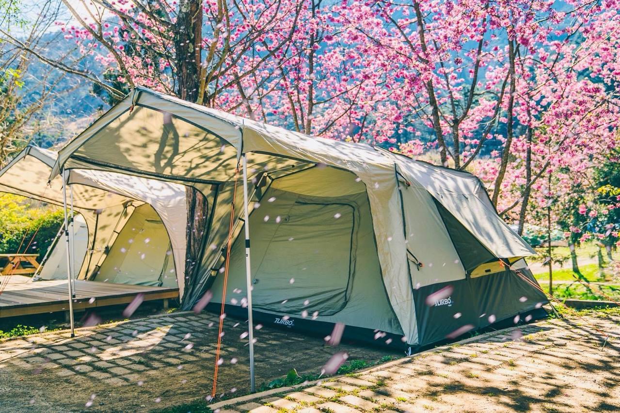 武陵農場免裝備賞櫻露營。 圖/雄獅旅遊提供