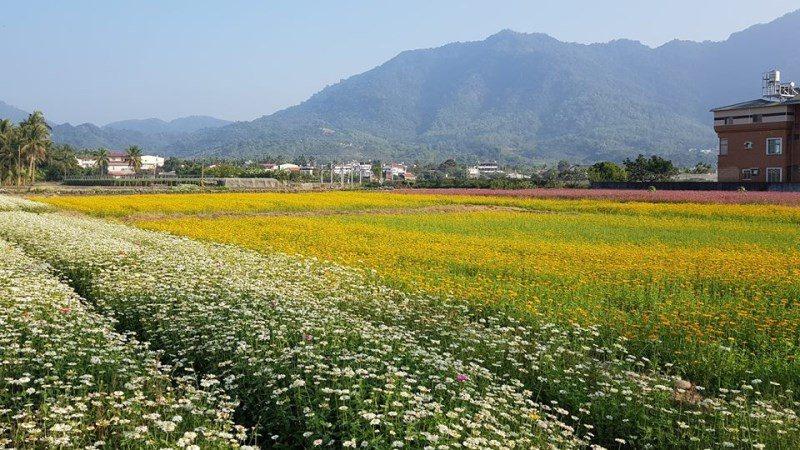 (圖/FB@一日遊景點-周傑倫) ▲整片的花海真的超好拍。