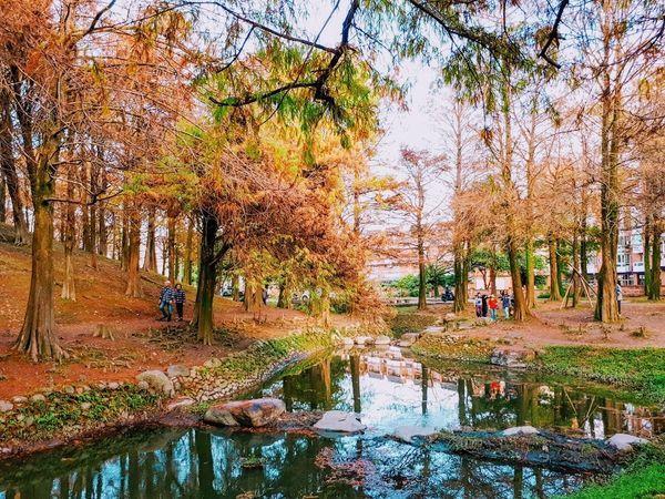 罗东运动公园落羽松 宜兰巿最易到达落羽松步道