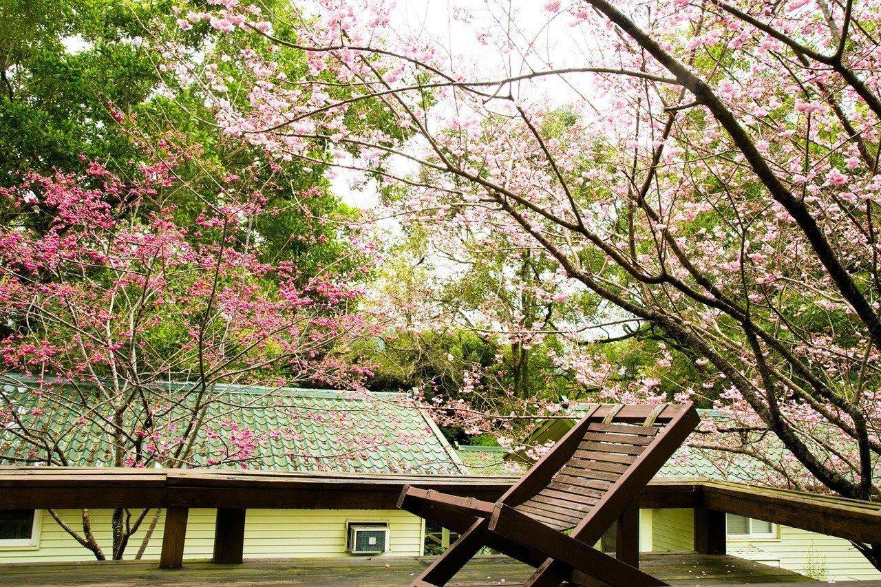 棲蘭山莊小木屋外花況。圖/力麗觀光提供