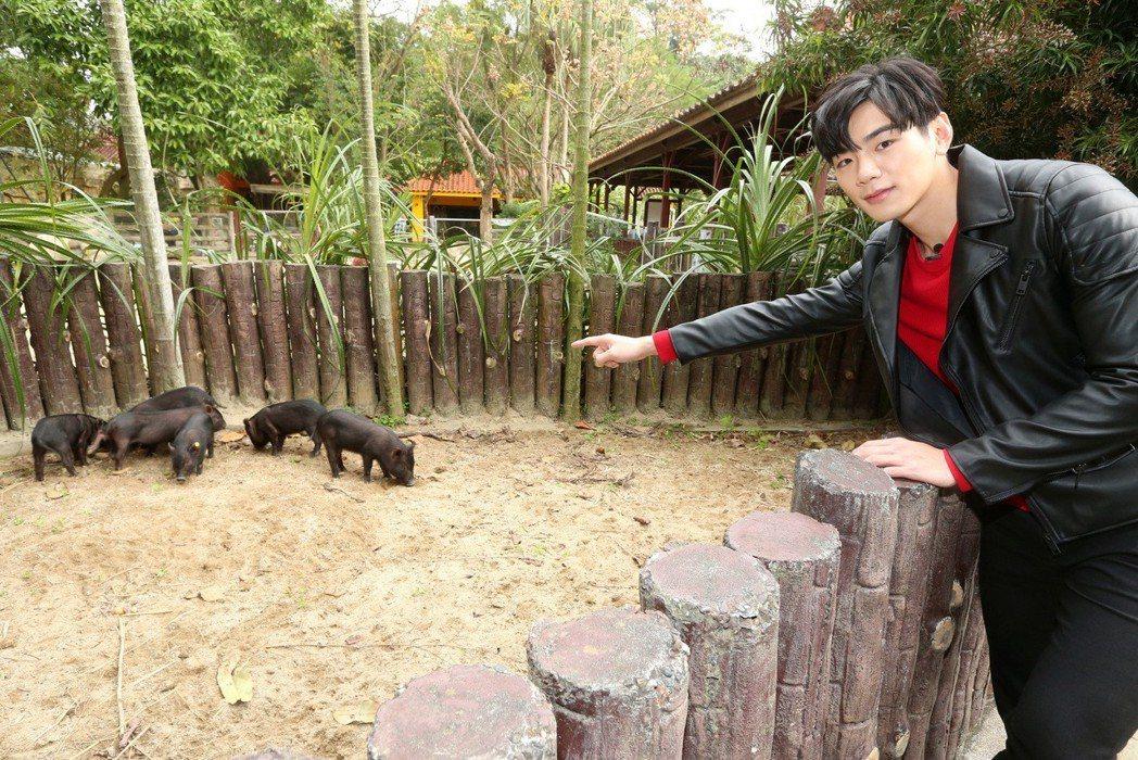 禾浩辰(布魯斯)過年遊動物園看豬。記者胡經周/攝影