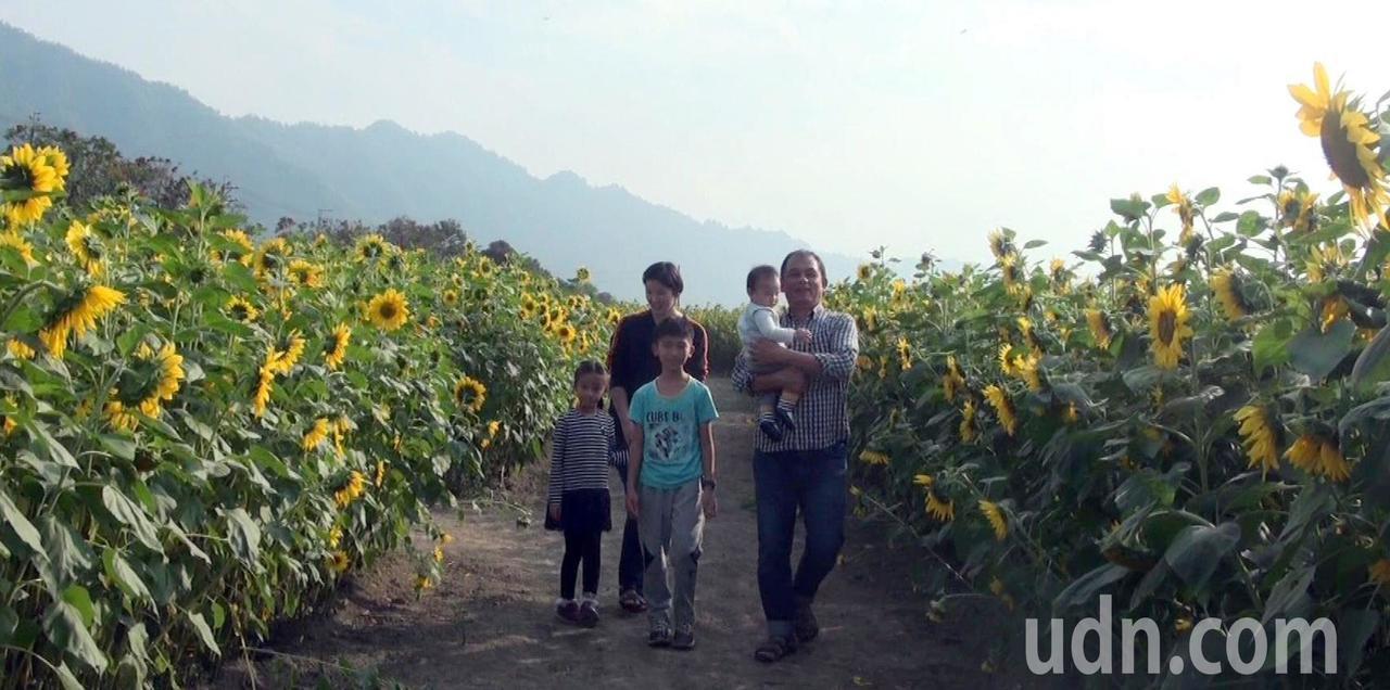 杉林區每年新春的「葵花迷宮」,吸引大批遊客造訪。記者王昭月/攝影