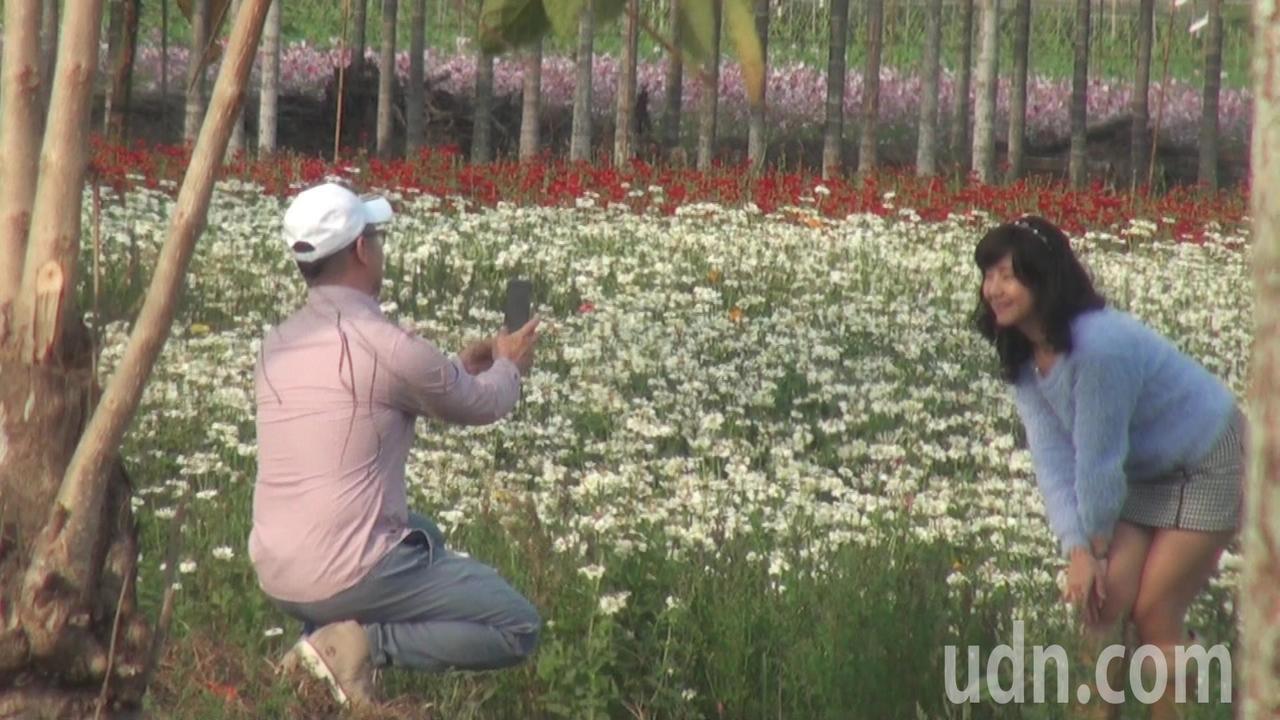杉林區花海處處,已有不少遊客搶先造訪獵影。記者王昭月/攝影