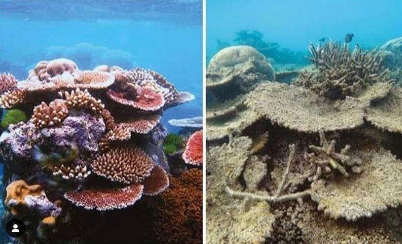 珊瑚的變化。圖/遠見提供